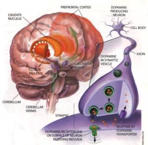 course003-brain