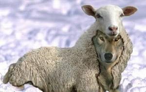 lobo-disfrazado-de-oveja